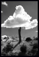 Cloud Tree 2 by Redtanglewood