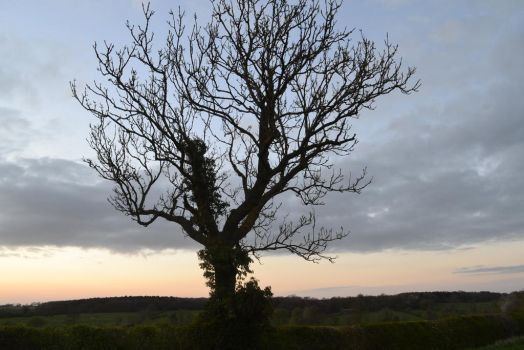tree at dusk by guitaristemily