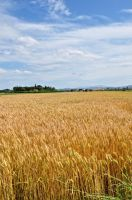 summer 2012 by KamySara