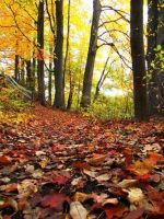 Follow the Fallen Leaves by hippe23chick
