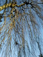 Branches 03 by Fea-Fanuilos-Stock