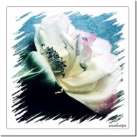 Painting flowers... by ansdesign