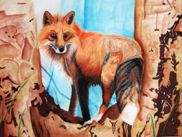 Red fox by Kendall202