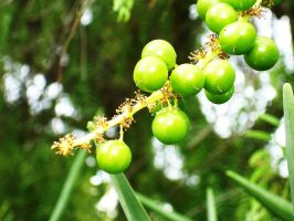 green berrys I by CrowsShadow