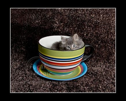 Kitty in a TeaCup by NicoleSlaughter
