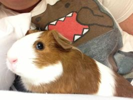Domo Nommin on Piggy by xDeseo