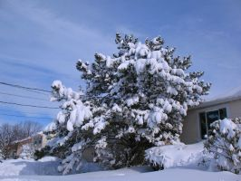 A Tree Weighed by Heavy Snow by WDWParksGal