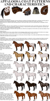 Appaloosa Patterns and Characteristics by SquirrelyTodd