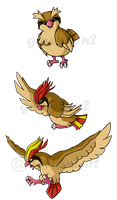 Pokemon Birds 1 WWS by the19thGinny