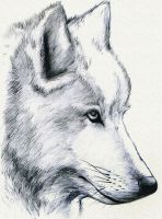 White Wolf by Mami02