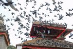 Birds over the temple (Katmandu, Nepal) by drewhoshkiw