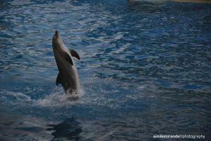 Dolphin by Fotogenia