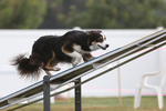 Happy Dog Agility II by Deliquesce-Flux