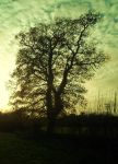 big winter tree by loobyloukitty