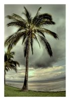 Palm Tree HDR by afdlips