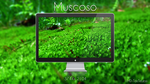 Muscoso by 1mD-TasTLeSs