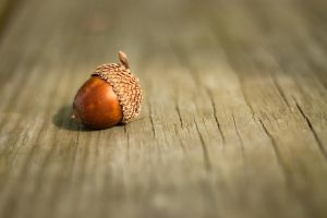 The Perfect Acorn by MuffinPie03