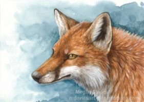 Red Fox Portrait by Pannya