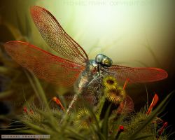 Dragonfly by MichaelF77