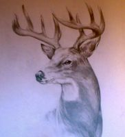 whitetail completed by Okojo1