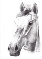 Graphite Horse  by Elise03