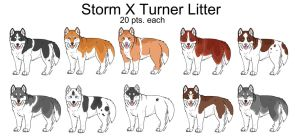 CLOSED Storm X Turner Litter by Msnarutowolfgirl