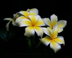 Yellow and White Cascade by TruemarkPhotography