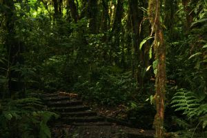 Jungle Walkway 2 by RaeyenIrael-Stock