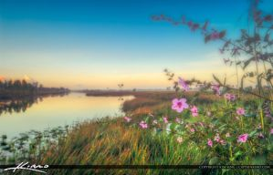 Pink-Flowers-Pine-Glades-Wetlands by CaptainKimo