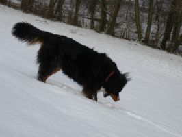 My dog likes snow by danette54