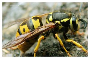 Bee 2 by selley
