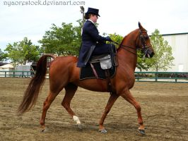 Rancho 2011 - Side-Saddle  02 by Nyaorestock