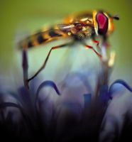 Hoverfly. by Megalithicmatt