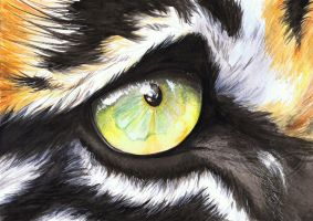 Gift: Tiger's Eye by wolfgryph