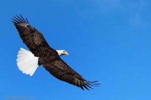 Soaring High by CanonSX20
