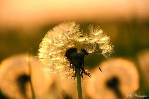 Gone with the Wind by MT-Photografien