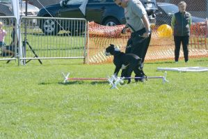 2014 Dog Festival, Try and Train 2 by Miss-Tbones