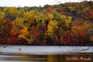 Colors of Autumn by DalePhotography