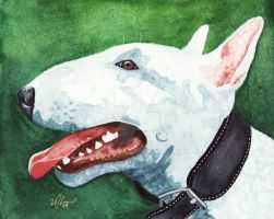 Bull Terrier Profile by GeocachingOdder