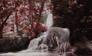 Color my world Pink | Surprise Manipulation by CreativeChaosStudios