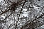 STOCK - Abstract in Snow 1 by jocarra