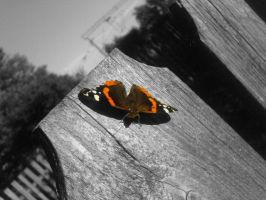 butterfly by chrisstina