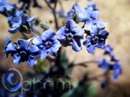 Blue Rue by LineGrass