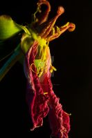 Dead Flower by tpphotography