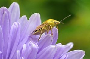 insect on a flower by sonafoitova