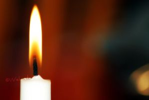 Flame.. by Wekuster
