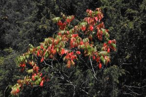 Fall Colors by magicia