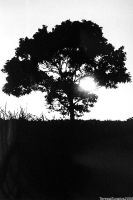 tree silhouette 02 by ayanosuke01