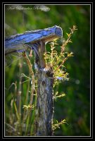 Regrowth by DesignKReations