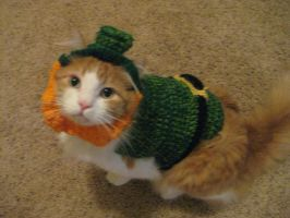 Leprechaun Cat by lillybearbutt